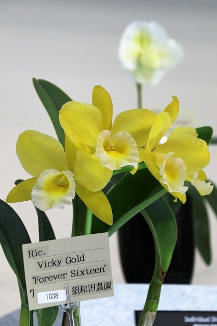 "Rlc.Vicky Gold ""Forever Sixteen"""