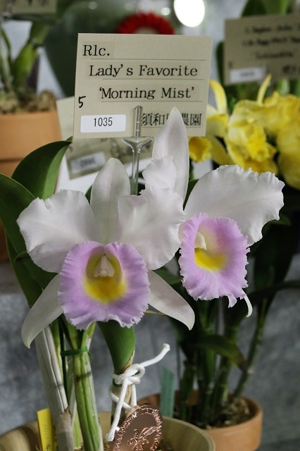 "Rlc.Lady's Favorite ""Morning Mist"""