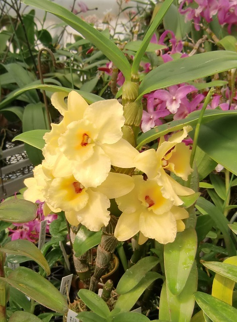 "Den.unknouwn ""Yellow Flag"""