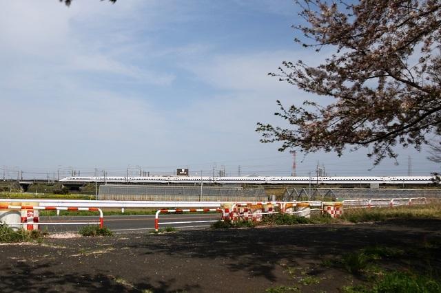 春爛漫 桜と新幹線