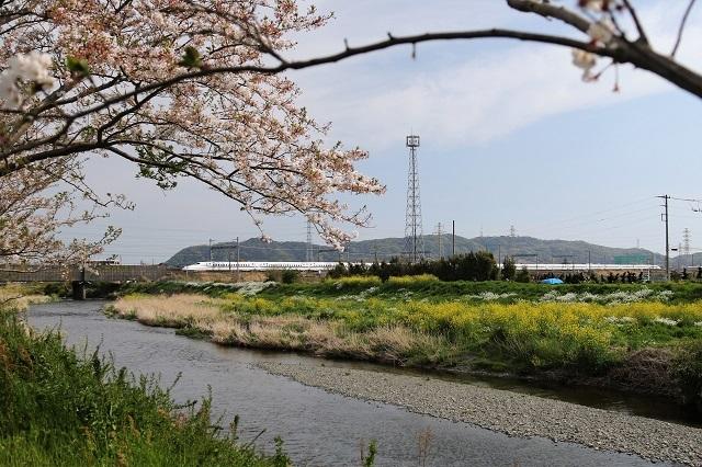春爛漫 金目川と新幹線