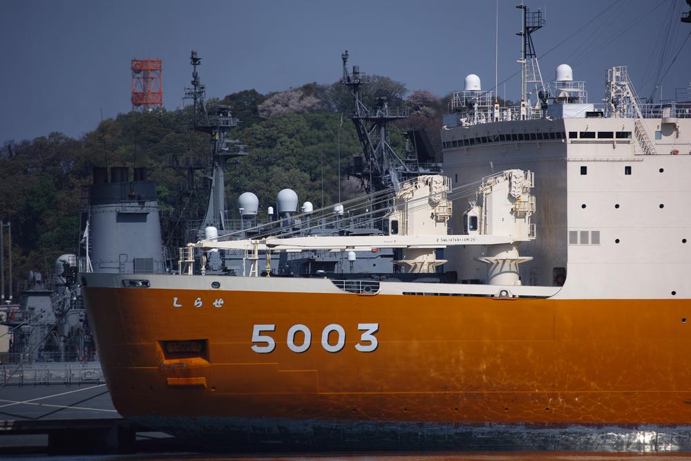 SD1M-3147.jpg