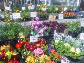季節の花たちb_R