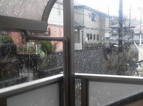 3月27日雪 (2)