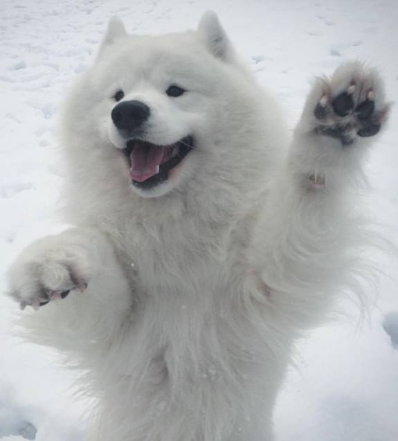 _Kody Puppy0001
