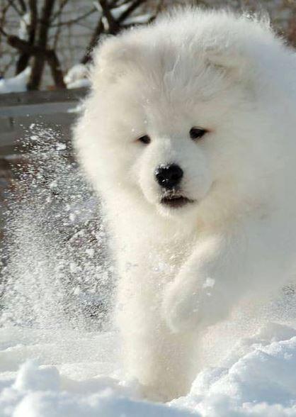 Kody-Puppy.jpg