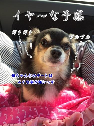 IMG_8917.jpg
