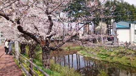 石割桜03LT