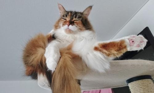 変な格好で寝る_小豆猫
