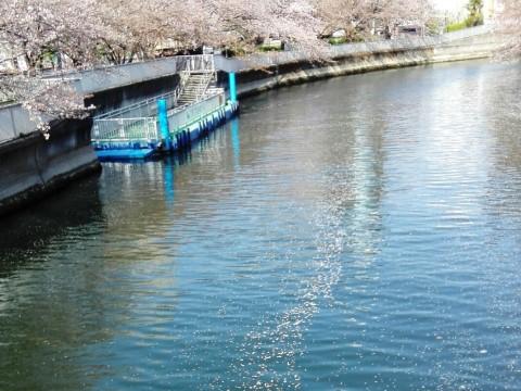 大横川の花筏