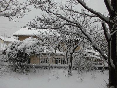 2.11庭の雪