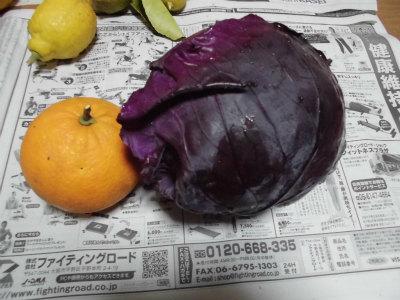 2.22収獲した紫キャベツ