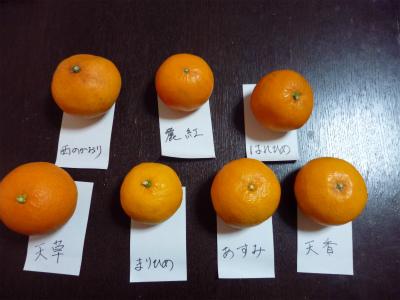 3.5買った柑橘1