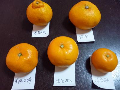 3.5買った柑橘2