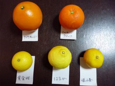 3.5買った柑橘3