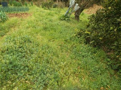 4.8草に埋もれる畑1
