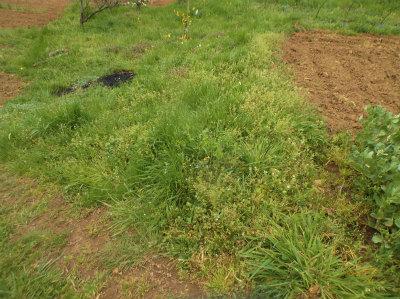 4.8草に埋もれる畑2