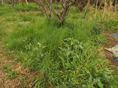 4.8草に埋もれる畑3