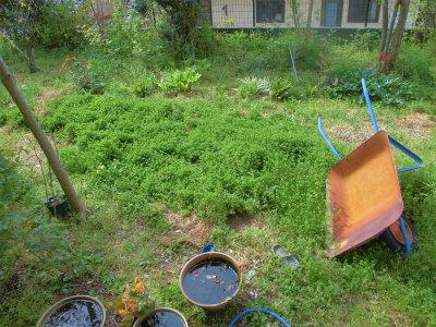 4.21草だらけの庭