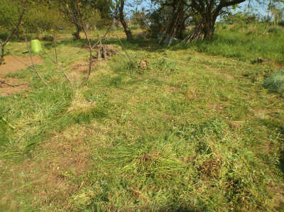 4.22栗の下の草刈