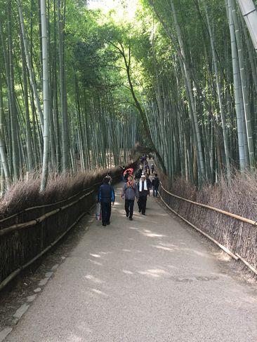 竹林の道_H29.03.05撮影