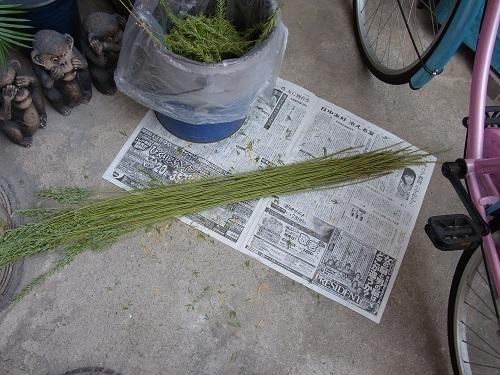 メドハギ・筮竹 (5)