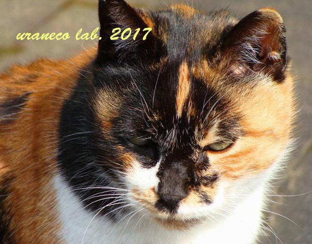 2月17日三毛猫2