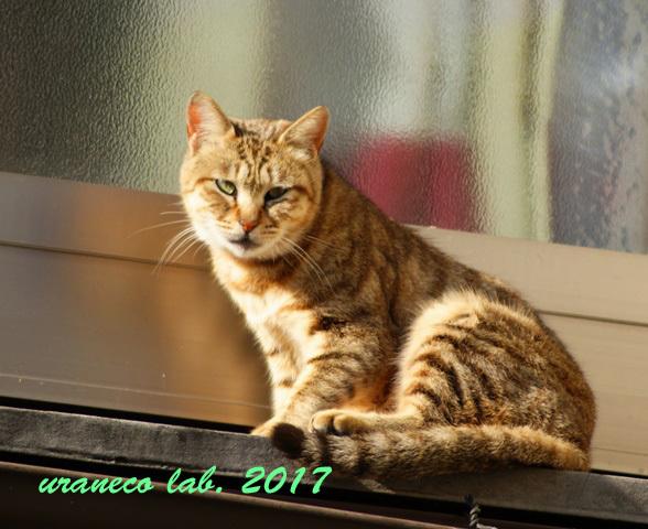 1月10日窓辺のネコ