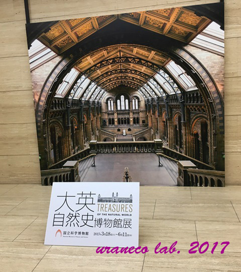 3月21日大英自然史博物館展8