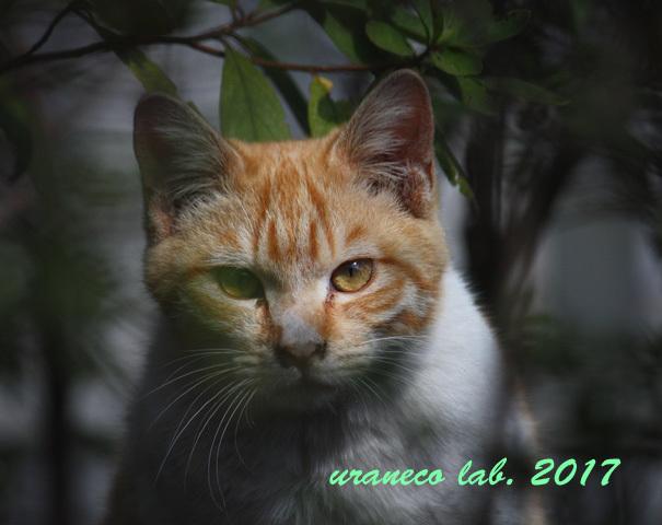 3月24日茶白子猫