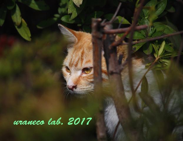 3月24日茶白子猫2