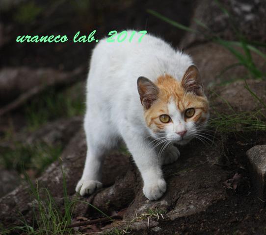 3月24日茶白子猫3