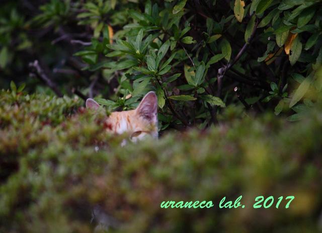 3月24日茶白子猫の隠れ家