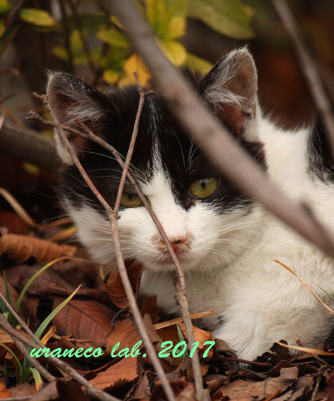 3月24日白黒子猫