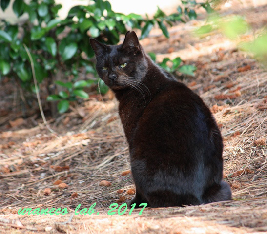 3月24日黒猫