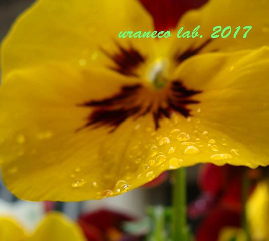 3月27日水滴4