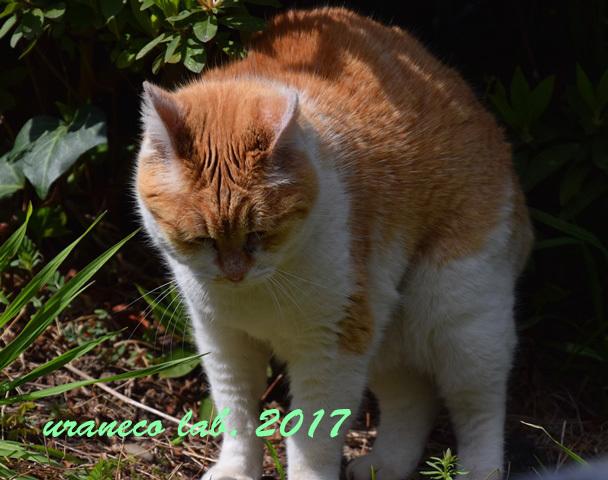 4月6日茶白猫3