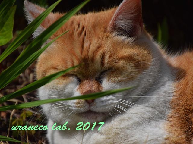 4月6日茶白猫2