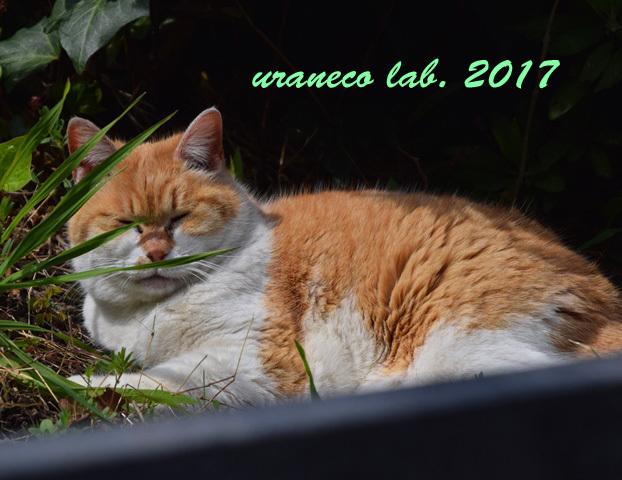4月6日茶白猫