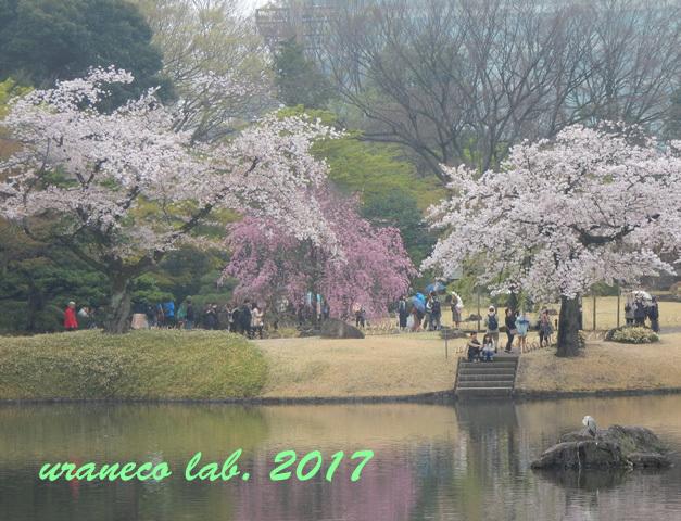 4月10日小石川後楽園5