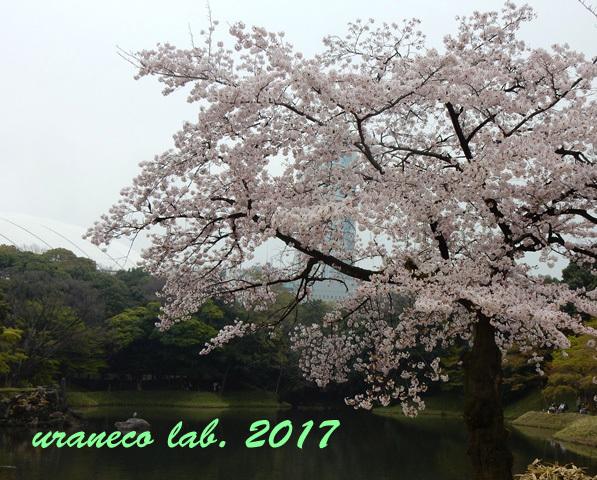 4月10日小石川後楽園2