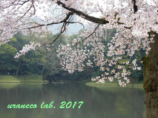 4月10日小石川後楽園
