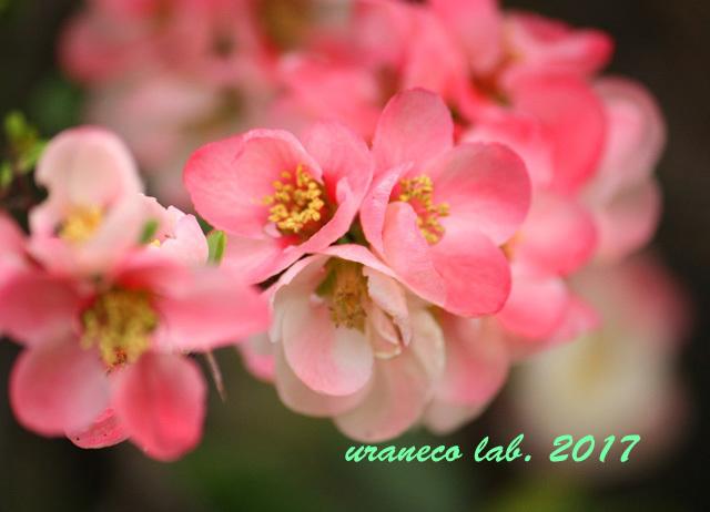 4月21日木瓜