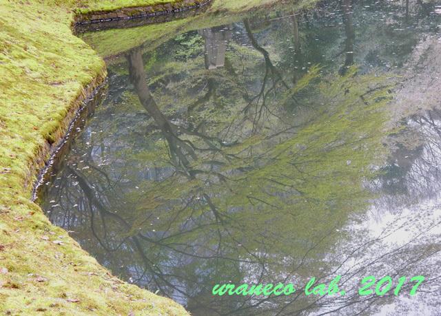 4月20日小石川後楽園2