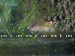 DSC00842-147.jpg