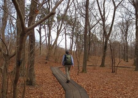 IMG_9806落ち葉の絨毯の森