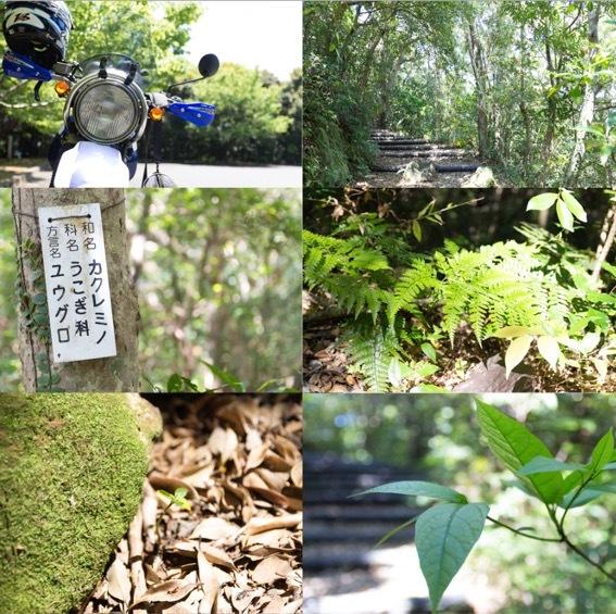 th_自然の森の中