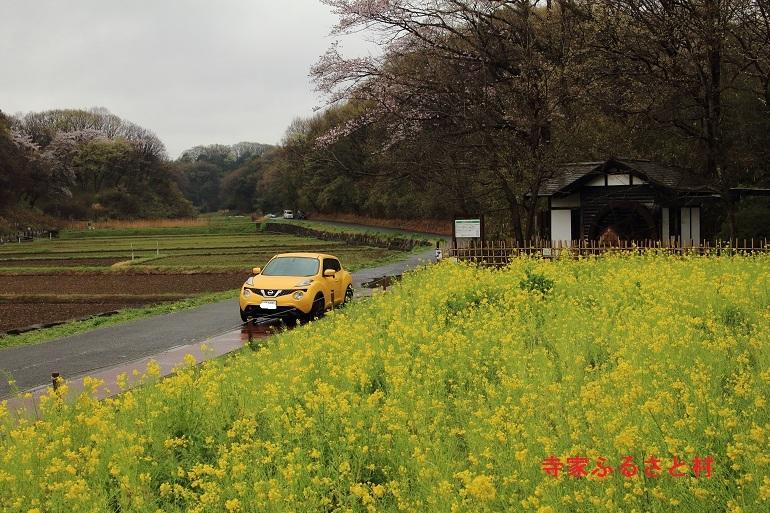 20170409寺家ふるさと村-1a