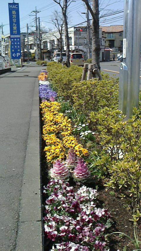 三月二十二日 お花