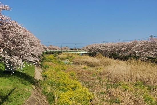 頓田川(とんだがわ)